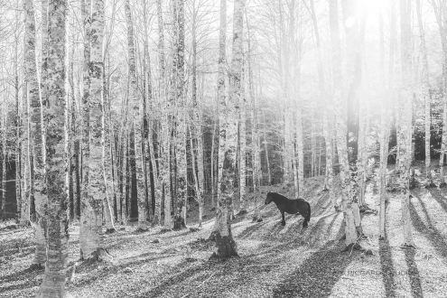 Lonesome horse in the forest